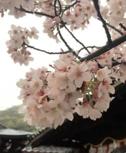 photo japan taken by vhh #8